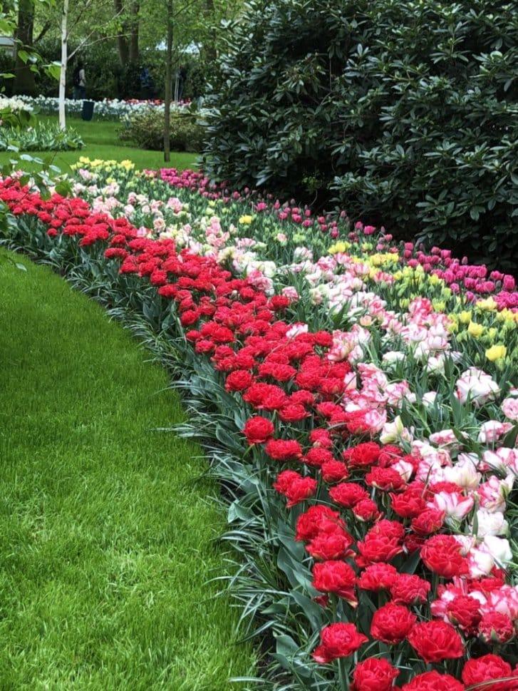 holland flowers 02