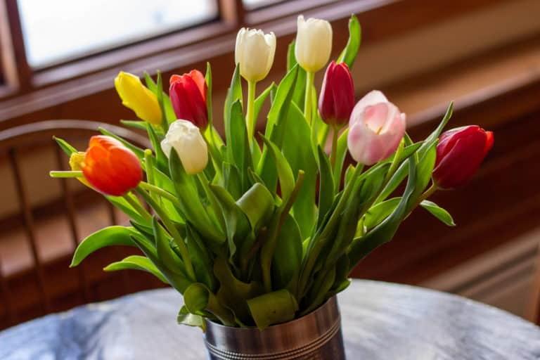 tulip article 01