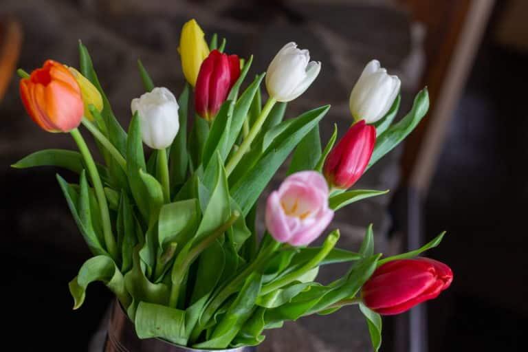 tulip article 02
